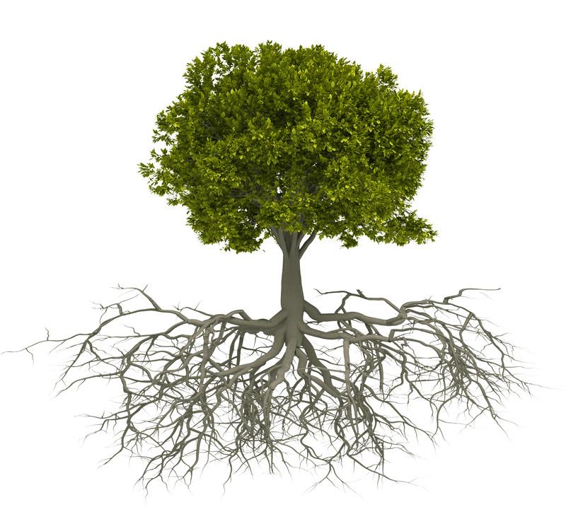 Tree Roots.jpg