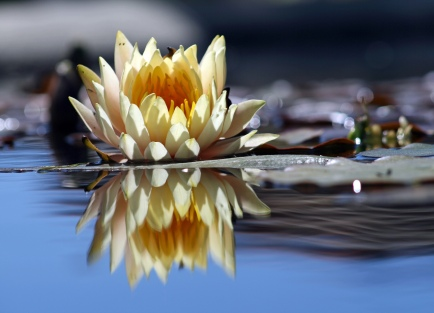 Flower_reflection-1.jpg